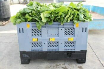 Folding vented Australian Standard plastic box with lettuce